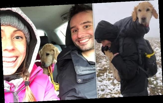 Hikers rescue dog from mountains where it had been lost for two weeks