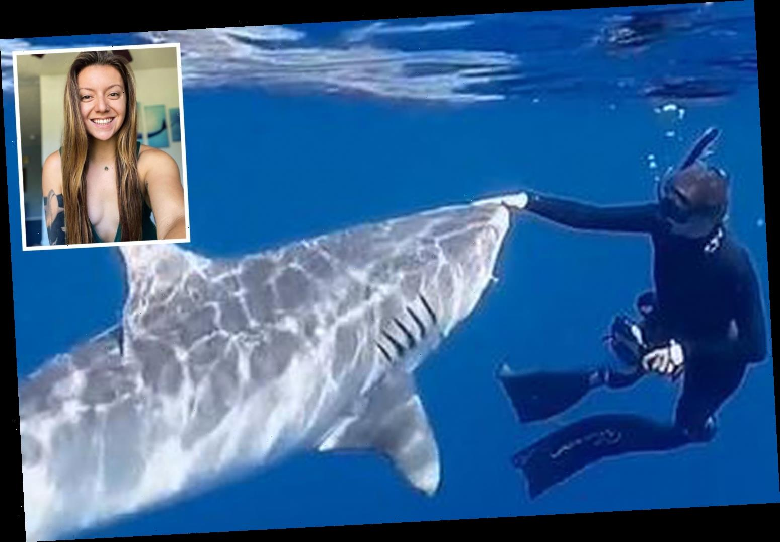 Incredible moment marine biologist reveals exactly how to fend off a killer shark if you come face-to-face with one
