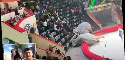 Two elephants who brawled during a show are banned from performing