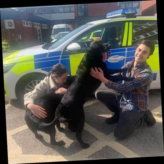 Emotional moment couple are reunited with their beloved dogs three days after they were stolen outside M&S