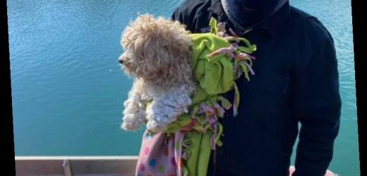 'Miracle Dog' Who Was Stuck on Detroit River for 4 Days Gets Adopted by His Rescuer