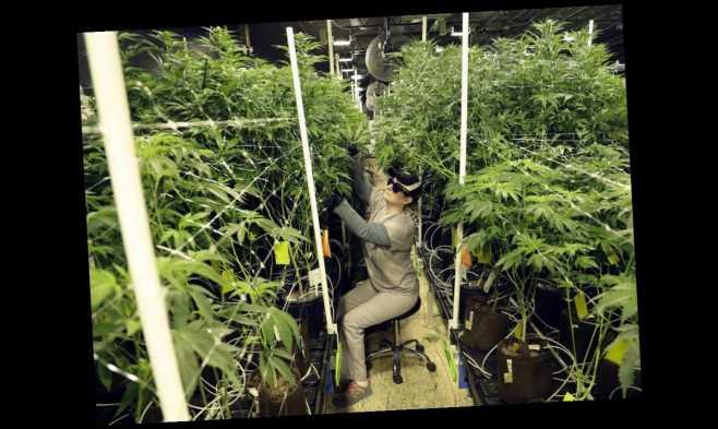 Portland marijuana dispensaries targeted in surge of robberies