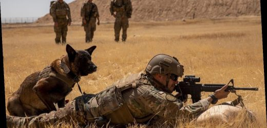 Shortage of military working dogs a national security risk, report warns