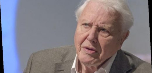 Green Britain: Sir David's hope for climate summit 'last chance to save planet'