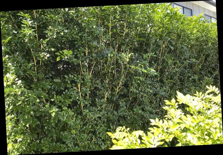 Camouflaged snake lurking in garden hedge has Facebook users doubting their eyesight – can YOU spot it?