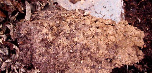 Clay, sand, silt, loam: How different soils affect gardens