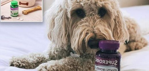 How vitamin supplements can help YOUR dog feel their very best