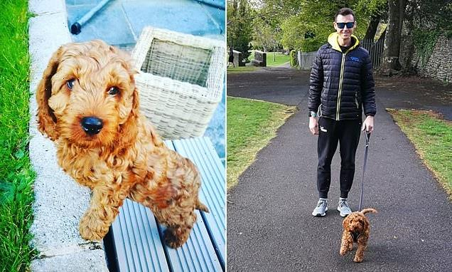Couple devastated after Cockapoo puppy mauled to death by another dog