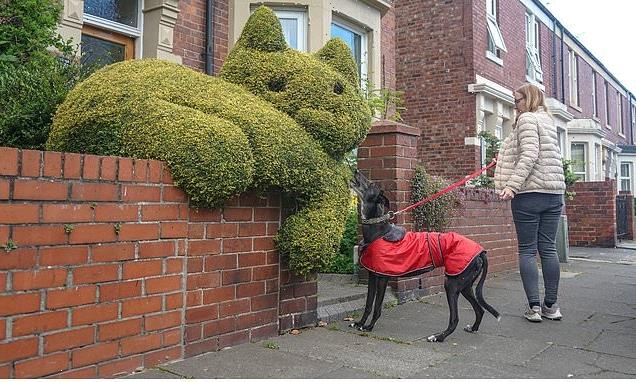 Homeowner crafts six foot feline in hedge attracting dogs interest