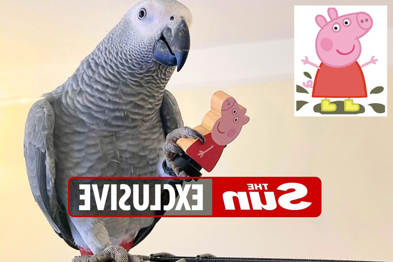 Peppa Pig-loving parrot has birthday bash themed on the kids' TVshow