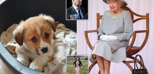Queen has been gifted a new corgi puppy for her official birthday