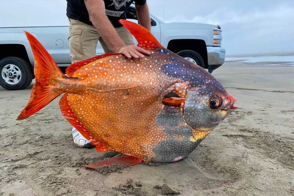 Bizarre 100-pound tropical fish hits the beach in Oregon of all places