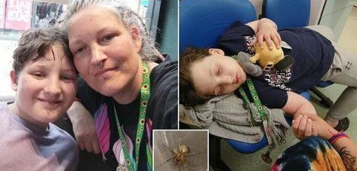 Boy, 8, is bitten on the bum by a false widow spider