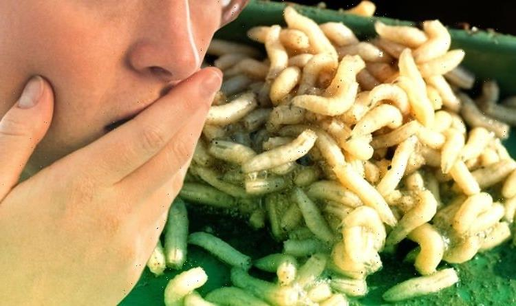 How to stop maggots in your wheelie bin