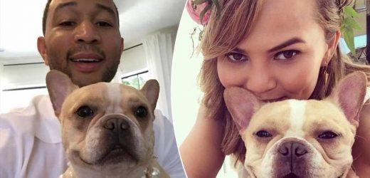 John Legend and Chrissy Teigen mourn loss of dog Pippa