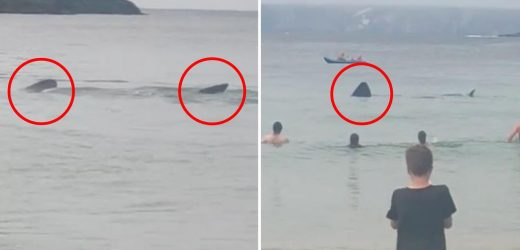 Terrifying footage captures moment two huge sharks stalk popular beach in Ireland leaving onlookers shocked