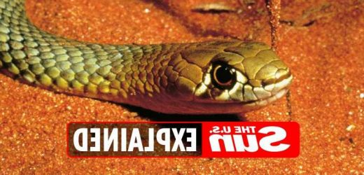 When is World Snake Day 2021?