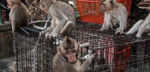 Baby monkeys chained up by NECKS in wet market that could spark next pandemic