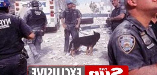 Incredible tale of 9/11's first rescue dog Atlas & his handler who spent 3000 hours searching rubble at Ground Zero