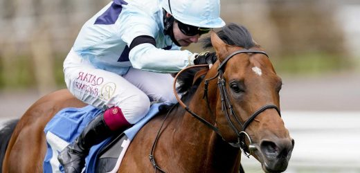 Big shake up in Champions Sprint betting at Ascot as favourite Starman retired to stud through injury